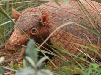 Ученые бьют тревогу: животным на Земле грозит массовое вымирание