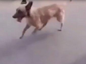 В Сети появилось видео с самой верной собакой