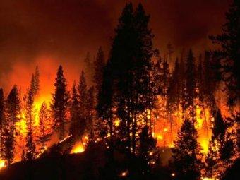 Пожары в чите унесли жизни трёх