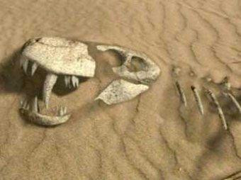 Причину массового вымирания животных на Земле нашли в Сибири