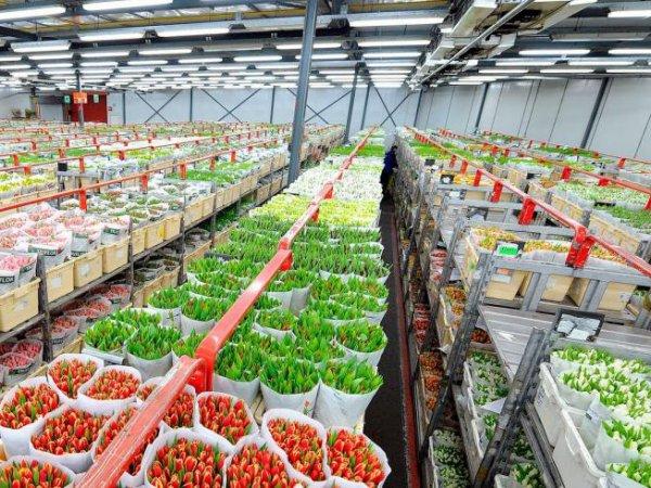 Россельхознадзор запретил ввозить цветы из Голландии и Эквадора