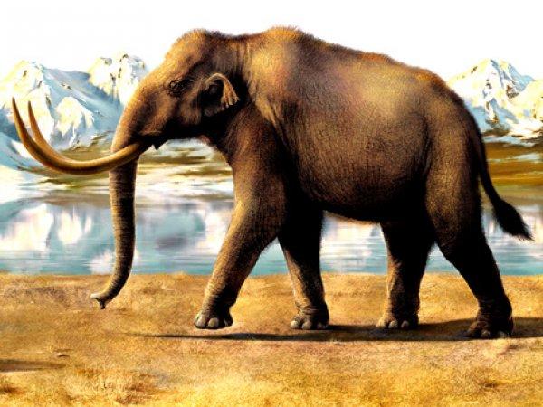 Учёные нашли в Пермском крае предка мамонта