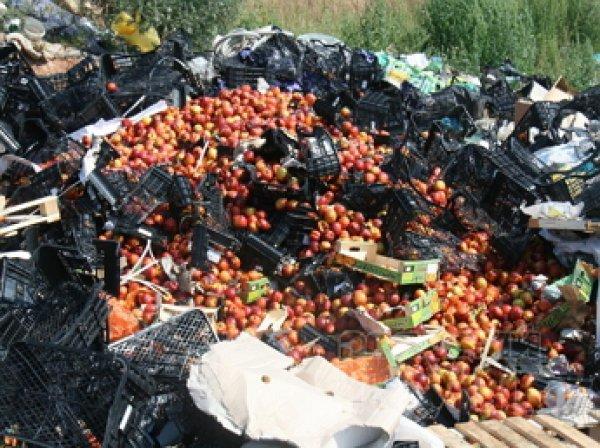 СМИ: жители Смоленщины спасли санкционные продукты ради самогонки