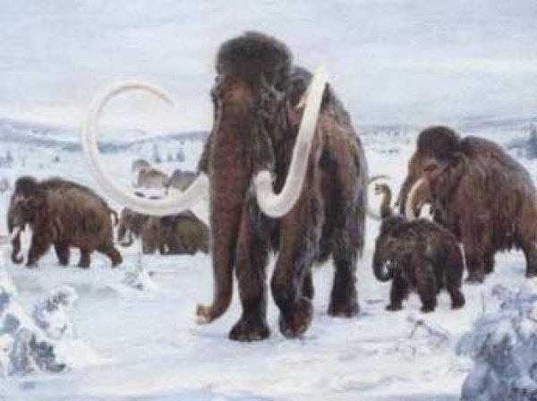 Ученые установили вину людей в вымирании мамонтов