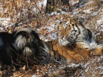 Сайт Приморского парка перестал работать из-за высокой нагрузки