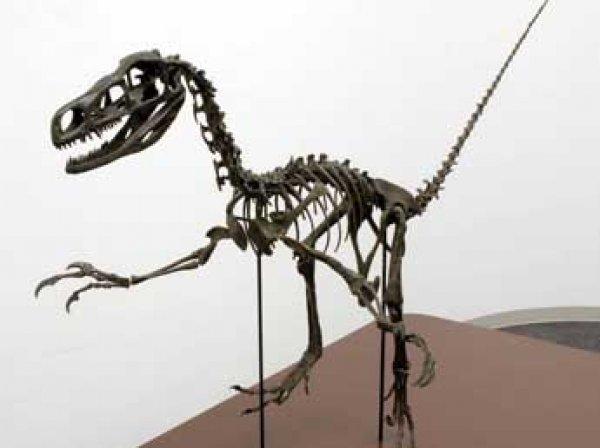 Археологи нашли в Японии неизвестный вид динозавров