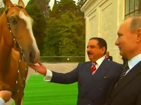 Путин подарил королю Бахрейна коня-чемпиона ахалтекинской породы