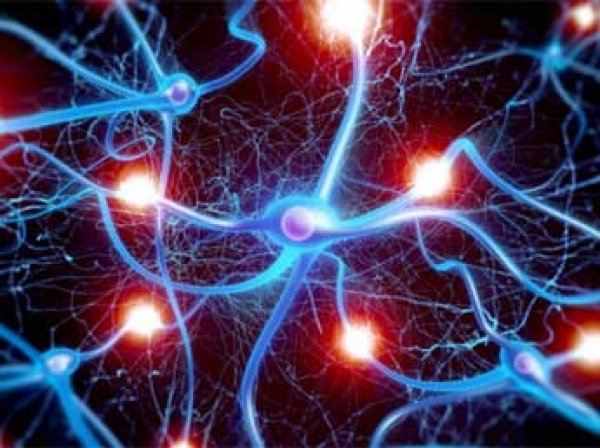 Ученые разработали «живой и дышащий» суперкомпьютер