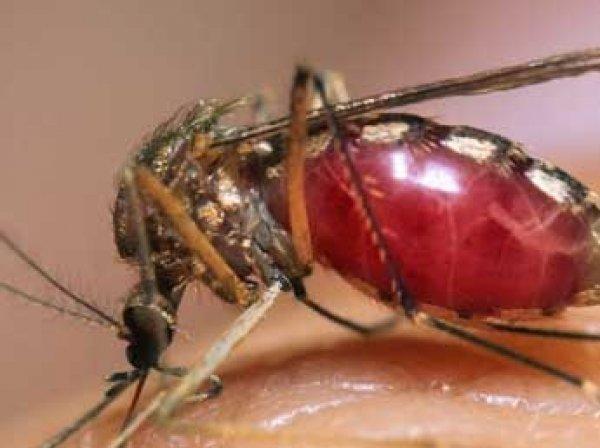 Ученые: смертельно опасный вирус Зика появился после опытов над комарами