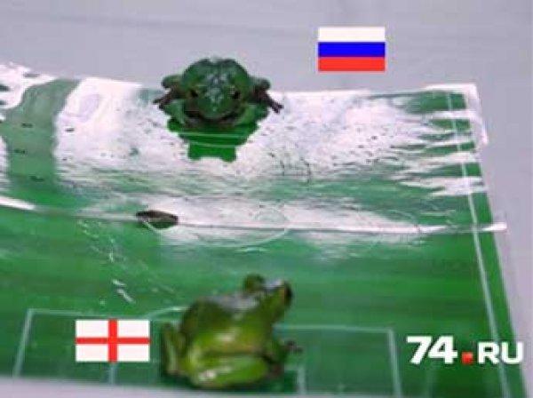 Россия — Англия, Евро 2016, прогноз: лягушки предсказали победителя в матче Россия — Англия на Евро-2016