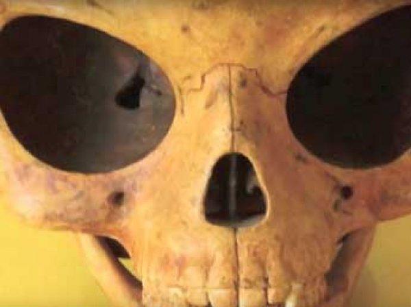 В Дании нашли загадочный череп пришельца с огромными глазницами