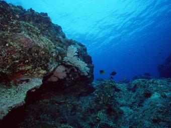 Таинственная светящаяся сфера на дне океана шокировала ученых