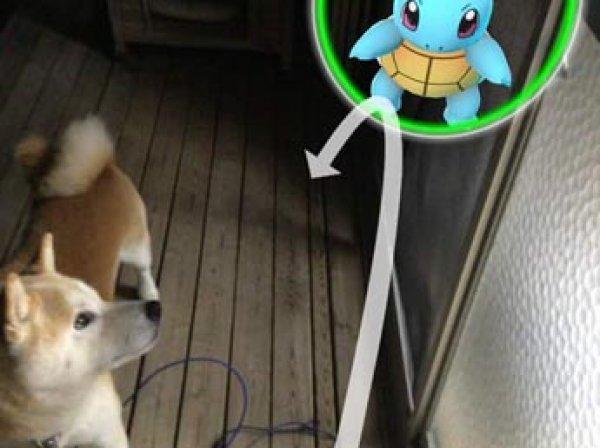 """В Японии домашние животные научились """"видеть"""" покемонов"""