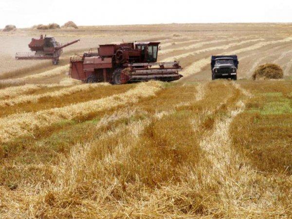 Китай запретил к ввозу урожай из Украины