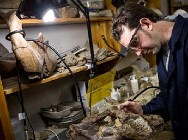 Российские ученые собрали скелет нового вида динозавров из Сибири