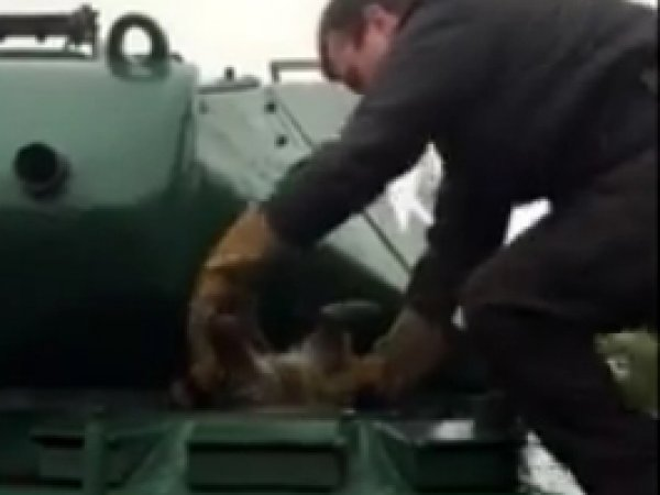 YouTube ВИДЕО с застрявшим в танке енотом стало хитом Интернета