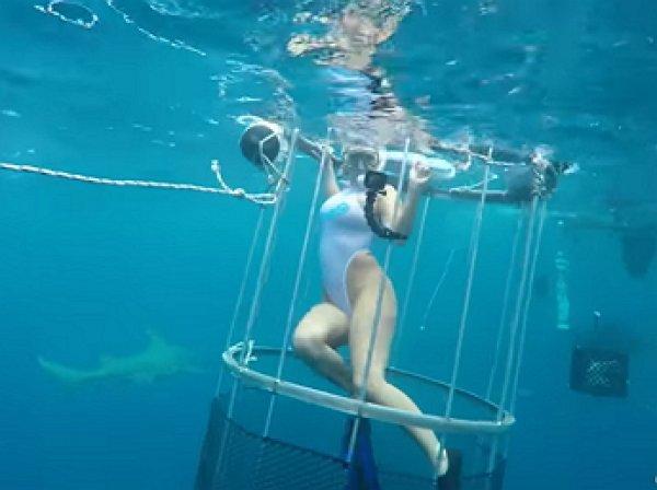 YouTube ВИДЕО: акула покусала известную порнозвезду на съемках во Флориде
