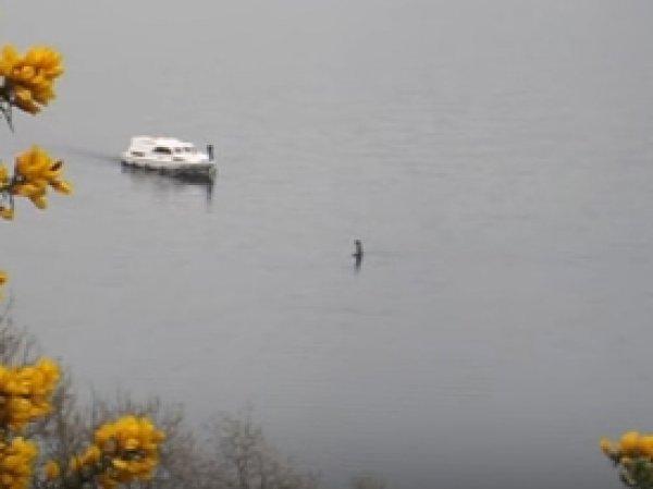 """YouTube ВИДЕО: на озере Лох-Несс снова заметили знаменитого """"монстра"""""""