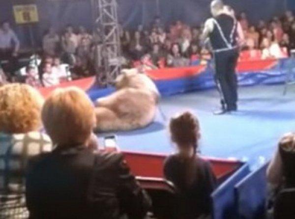 YouTube ВИДЕО: на Украине цирковой медведь напал на зрителей