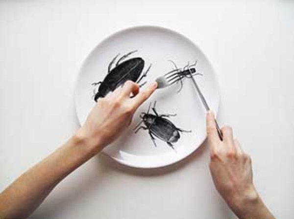 Ученые: употребление людьми насекомых в пищу замедлит глобальное потепление