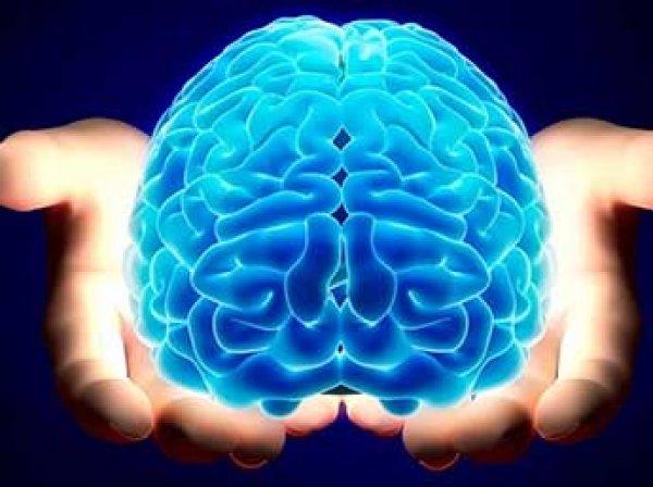 Специалисты IBM насчитали в мозге человека 11 измерений
