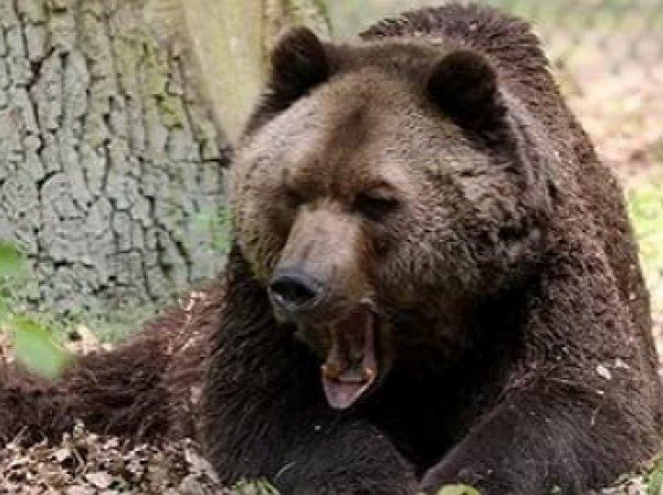 На Аляске 11-летний мальчик спас родственников от медведя (ФОТО)