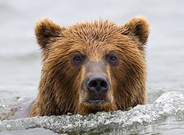 Охотник в Иркутской области убил двух рыбаков, отпугивая медведя