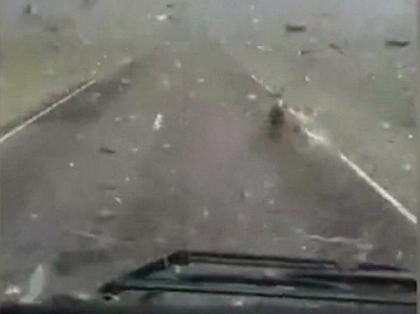 YouTube шокировало видео нашествия саранчи в Дагестане