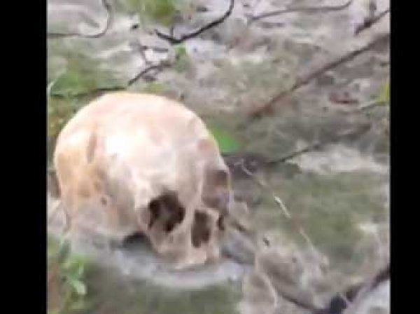 Жуткий улов: на берегу реки Иртыш рыбаки нашли десятки черепов и человеческие кости (ВИДЕО)