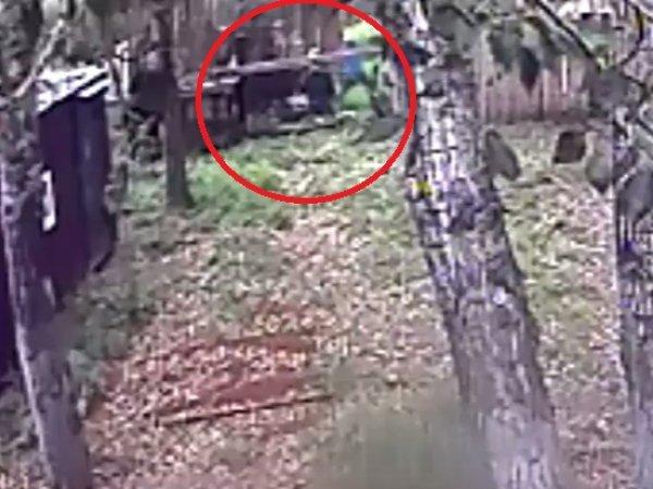 В Иркутской области медведь откусил руку пьяному посетителю кафе: видео ЧП появилось на YouTube