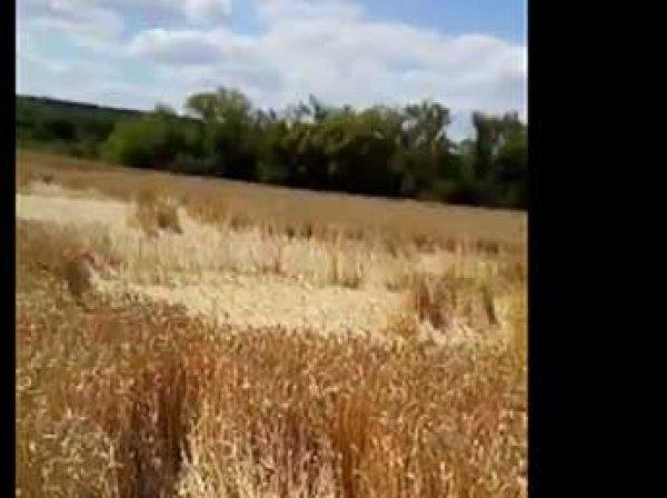"""В Липецкой области на полях с пшеницей появились """"послания от инопланетян"""" (ВИДЕО)"""