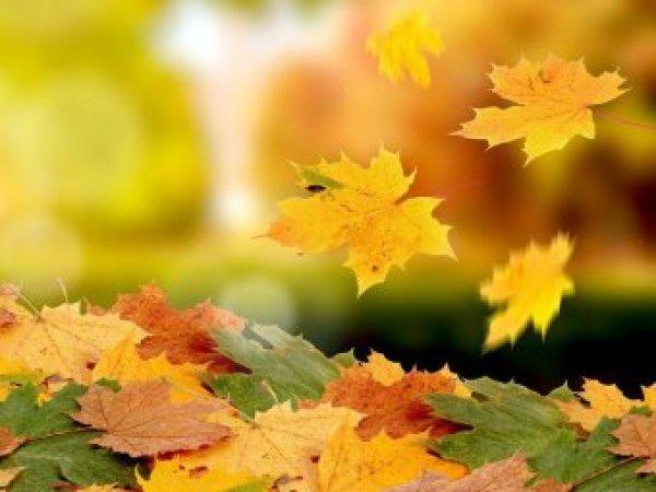 Какой сегодня праздник: 7 сентября 2017 отмечается церковный праздник Тит Листопадник