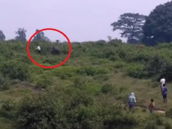 На YouTube появилось видео, как в Индии слон до смерти затоптал любителя селфи