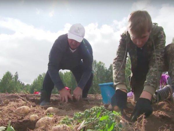 """""""Не только сажает, но и выкапывает"""": на НТВ высмеяли Лукашенко, собравшего 105 тонн картофеля"""