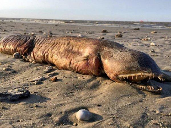 """Ученые выяснили, что за загадочное существо выбросил ураган """"Харви"""" на берег (ФОТО)"""