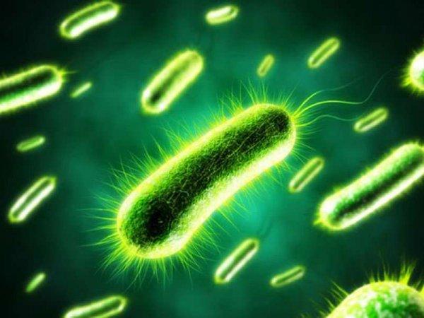Ученые доказали факт появления жизни из неживой материи