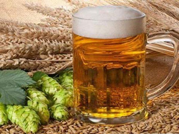 Ученые: глобальное потепление приведет к дефициту пива