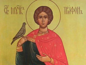 Какой сегодня праздник 28.12.2018: церковный праздник Трифонов день
