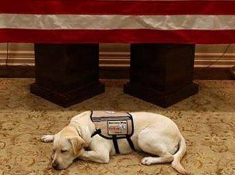 Трогательное фото пса Джорджа Буша, который не отходит от его гроба, стало вирусным в Сети