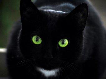 А вы покачайте головой: удивительная оптическая иллюзия захватила Интернет