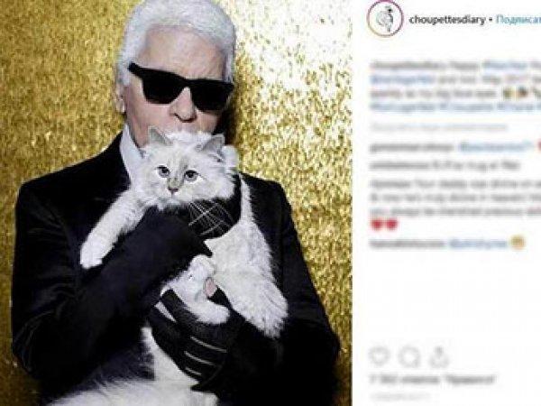 Легендарный модельер Карл Лагерфельд завещал состояние своей кошке