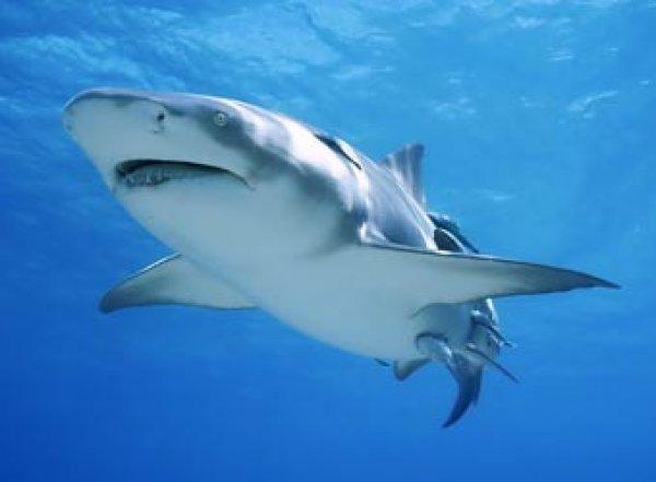 Туристка плавала рядом с акулой, не подозревая об этом, и осталась в живых (ВИДЕО)