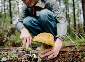 Шок: Минсельхоз решил контролировать сбор грибов и ягод