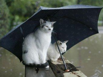 Прогноз погоды на 10 дней: новости об аномальных холодах и дождях