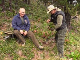 Видео похода Путина и Шойгу за грибами в тайгу появилось в Сети