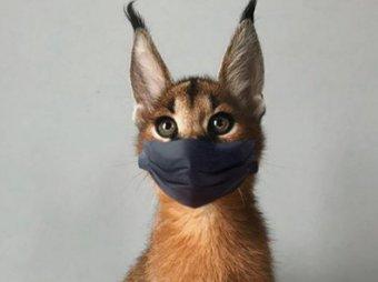 Домашним животным грозит карантин из-за коронавируса — их уже наряжают в маски (ФОТО)