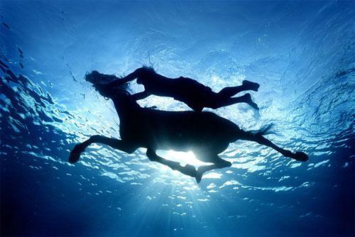 Некоторые шедевры даются Зене особенно  нелегко, как, например, фотография с лошадью…Она сделана на Карибах и фотографу пришлось просидеть под водой две недели ради одного кадра…