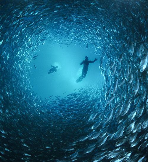 Она, словно русалка из сказки Андерсена, прилагает титанические усилия, чтобы адаптироваться к земному миру, но все понимают, что настоящая её жизнь где-то там -  в волнах, в синей глубине океана…