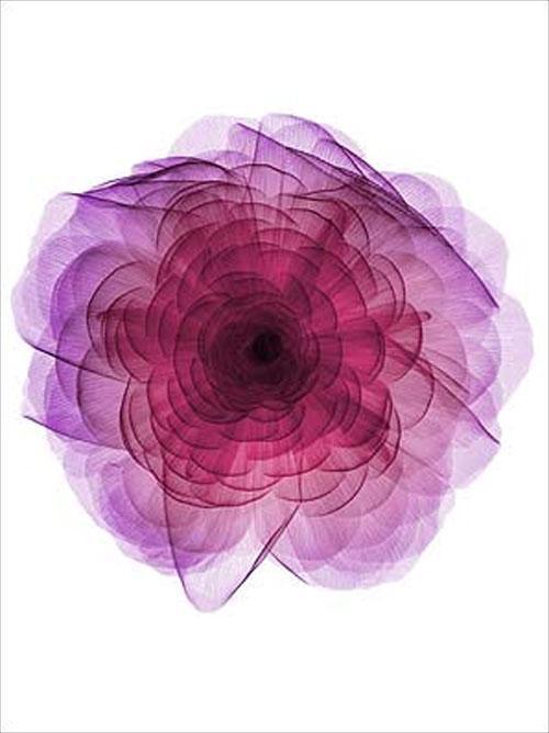 Ник Визи использует для создания своих необычных картин  рентген…