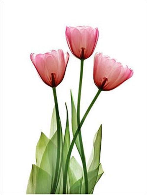 В поле его зрения уже попали цветы…